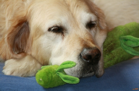 Dog, with lucky bamboo squeaky toy                     flashingfuchur/Flickr