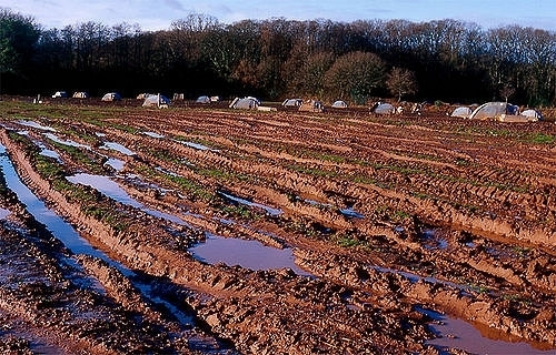 Soggy, muddy mess.                                                        Tom Scott/Flickr