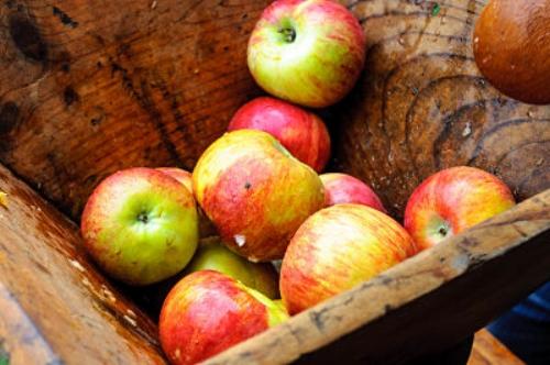 Apples, a fall treat. — JOgden/Flickr