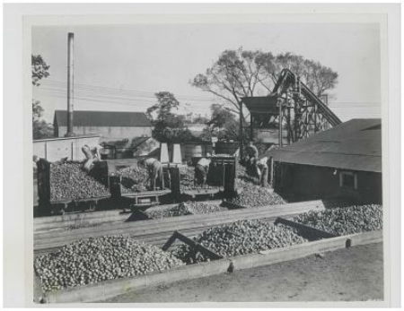 Apple processing at Laird's, Colts Neck, NJ. — Courtesy Laird & Co.
