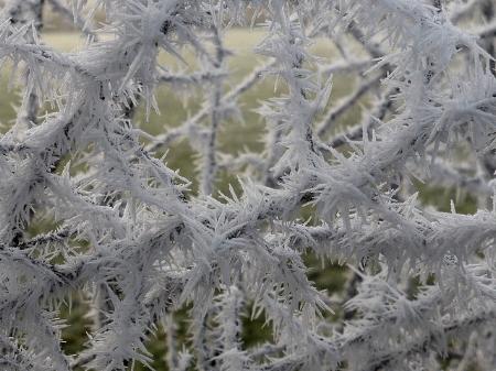 Frost crystals, up close. — myri_bonnie/Flickr