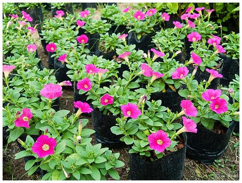 It's easy to get carried away with seedlings in bloom. — B Inxee/Flickr