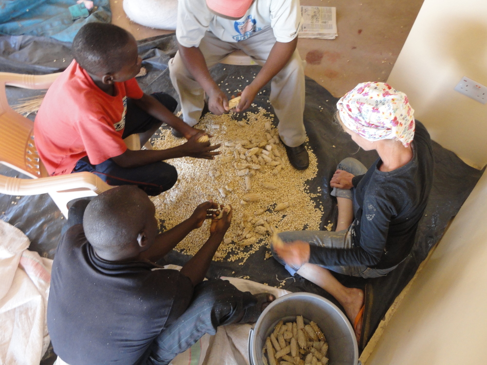 05. peeling dried maize from the cob - hard work.JPG