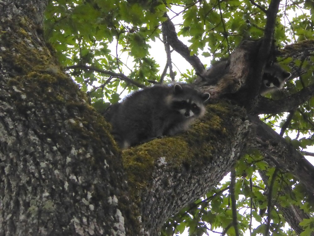 They were oh so cute. Cuter if they stay in the tree.