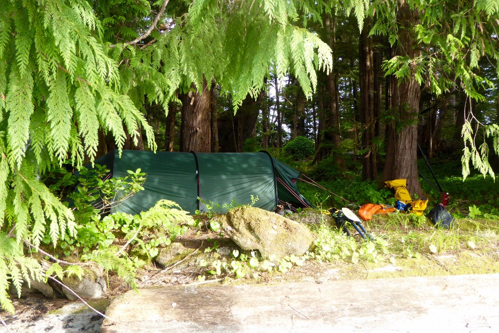 When there is a hardened campsite in the forest, we take advantage of it.