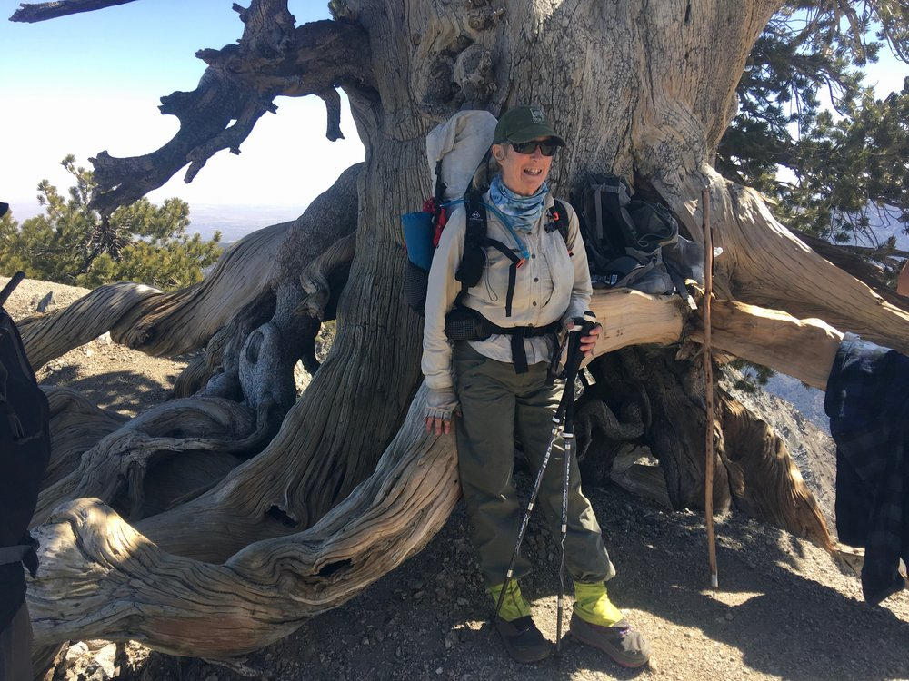 We met several other hikers today(non PCT hikers) who hike this mountain every year just to touch this tree and appreciate its long life. There were quite a few hikers today as this trail is quite close to the large population centers of southern CA. At the summit there is a plaque honoring Baden Powell who was a founder of the Boy Scouts.