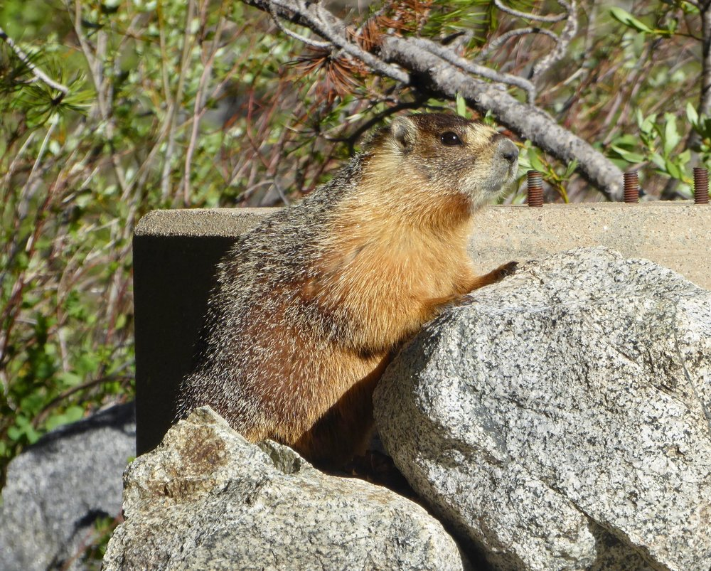 The marmot seemed friendly enough and we were able to pass with no confrontation.