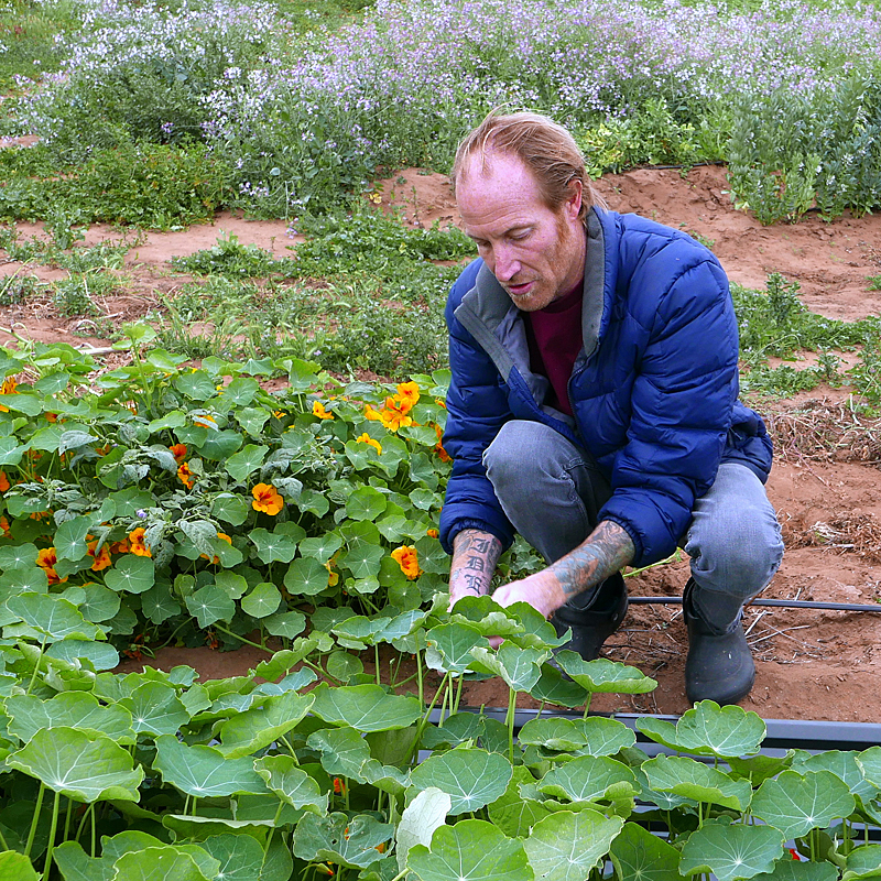 Davin-Waite-picking-nasturtiums.jpg
