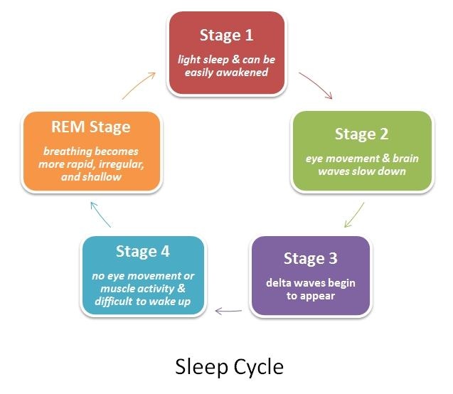 We cycle through these stages throughout the night. Each time we enter REM, we are in it for a longer period of time.