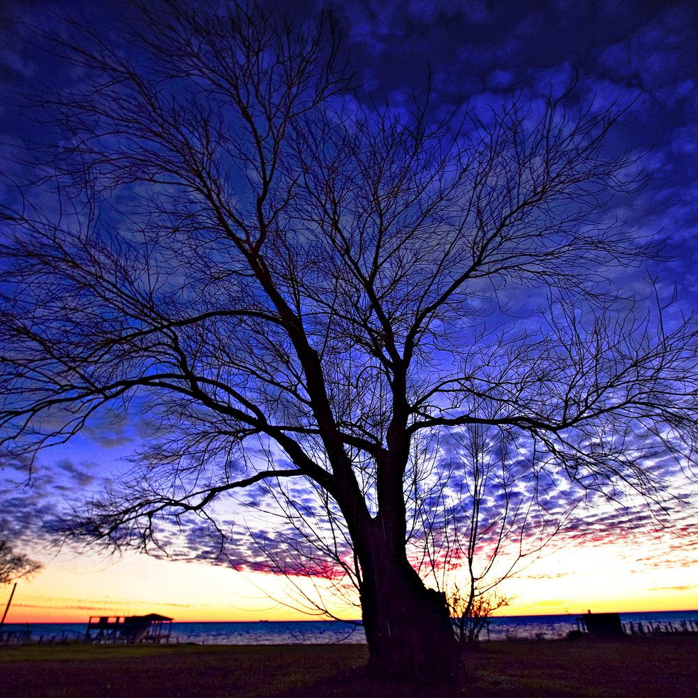 Aydlett Blue Afterglow Tree.jpg