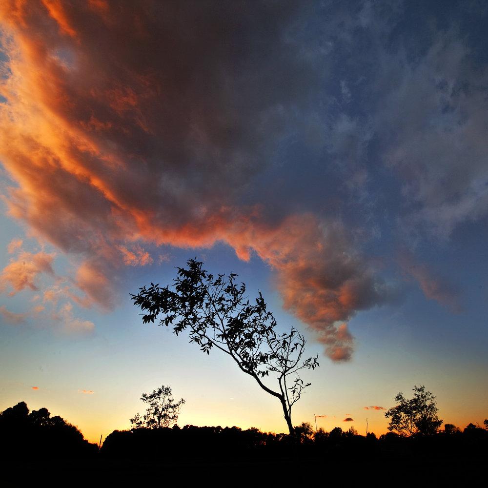 aydlett single tree cloud.jpg