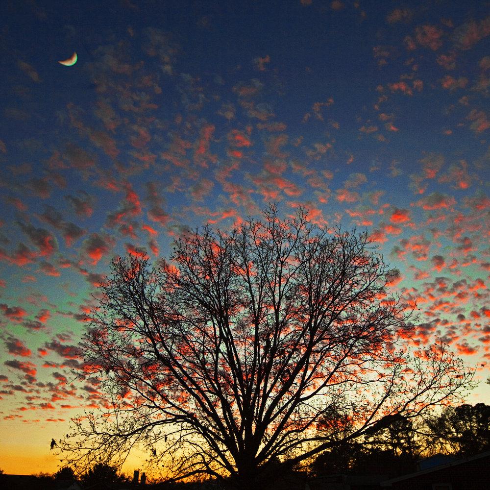 aydlett clouds moon tree sunset 18x18_BRIGHT.jpg