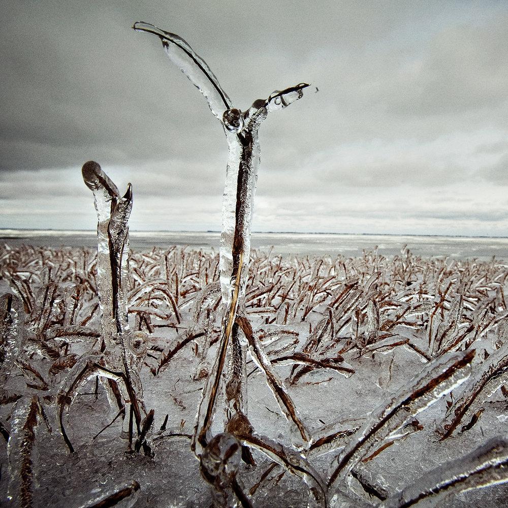 ice storm grass.jpg