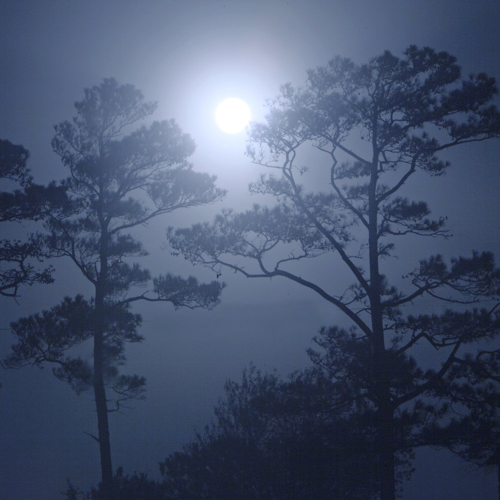 moon aydlett trees.jpg