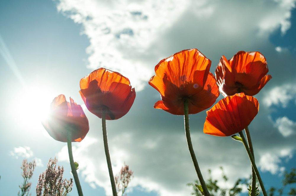 flower-399409.jpg