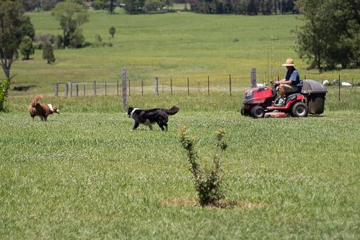 Avelon Farm-53.jpg