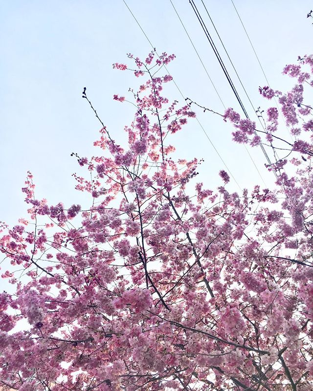 🌸🌸🌸 lunchtime walks.