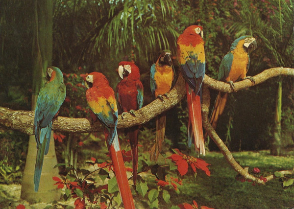 Parrot_Jungle_Miami_16_grande.jpg
