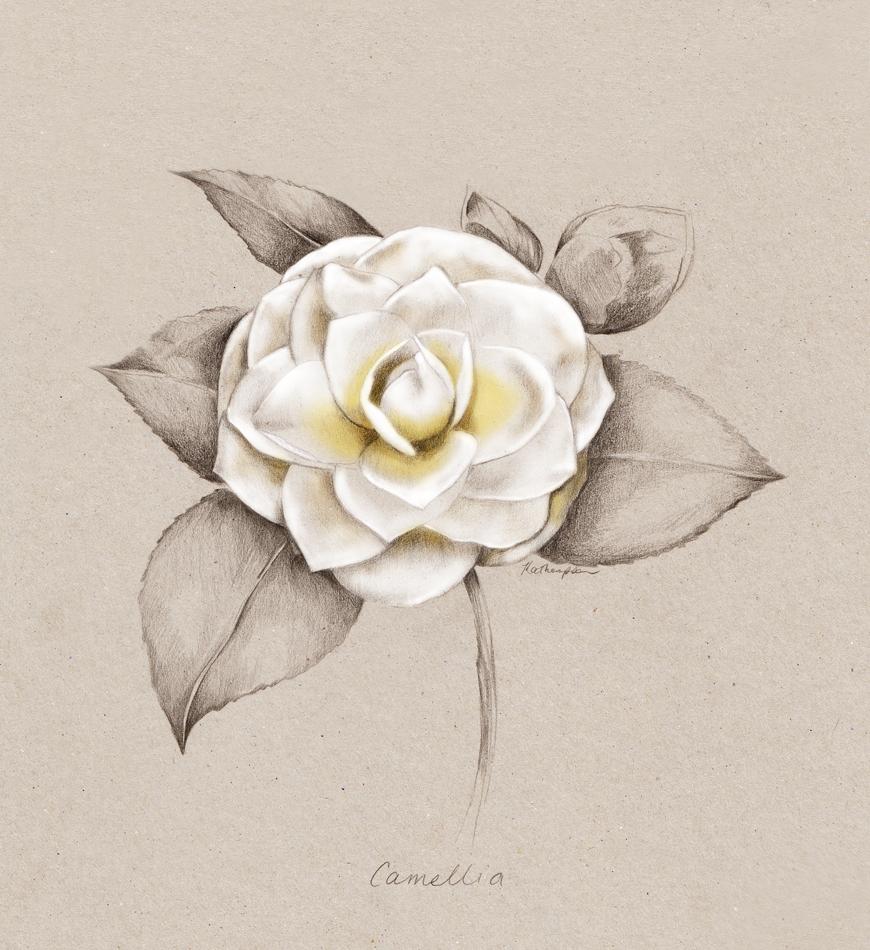 Kelly_thompson_illustration_art_Camellia_Your_home_magazine_131490df-fd22-4e4d-b2f1-c252ac6a8e65.jpg