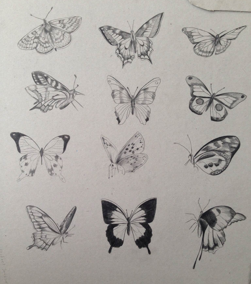 butterflies_butterfly_pencil_sketch_Kelly_thompson_art_illustration_drawing_illustrator_blog.jpg