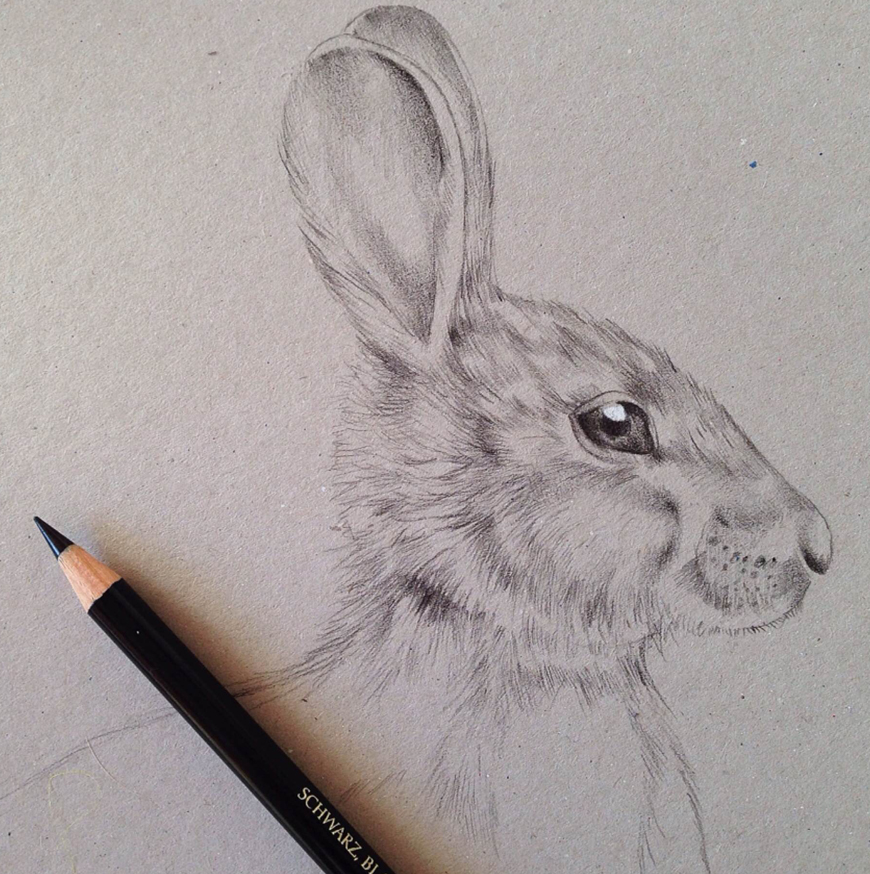 hare_rabbit_Kelly_thompson_art_illustration_drawing_illustrator_blog.jpg