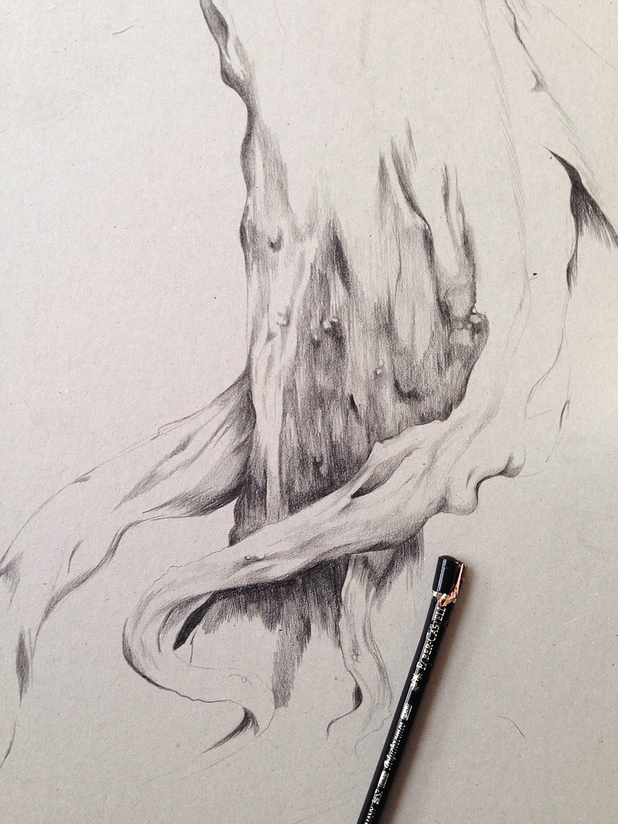 tree_botanical_pencil_sketch_Kelly_thompson_art_illustration_drawing_illustrator_blog.jpg