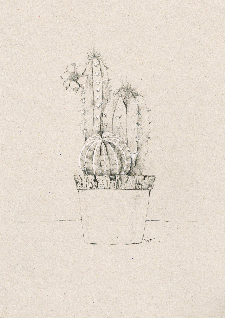 3_Kelly_thompson_Ruby_dreamers_illustration_cactus.jpg