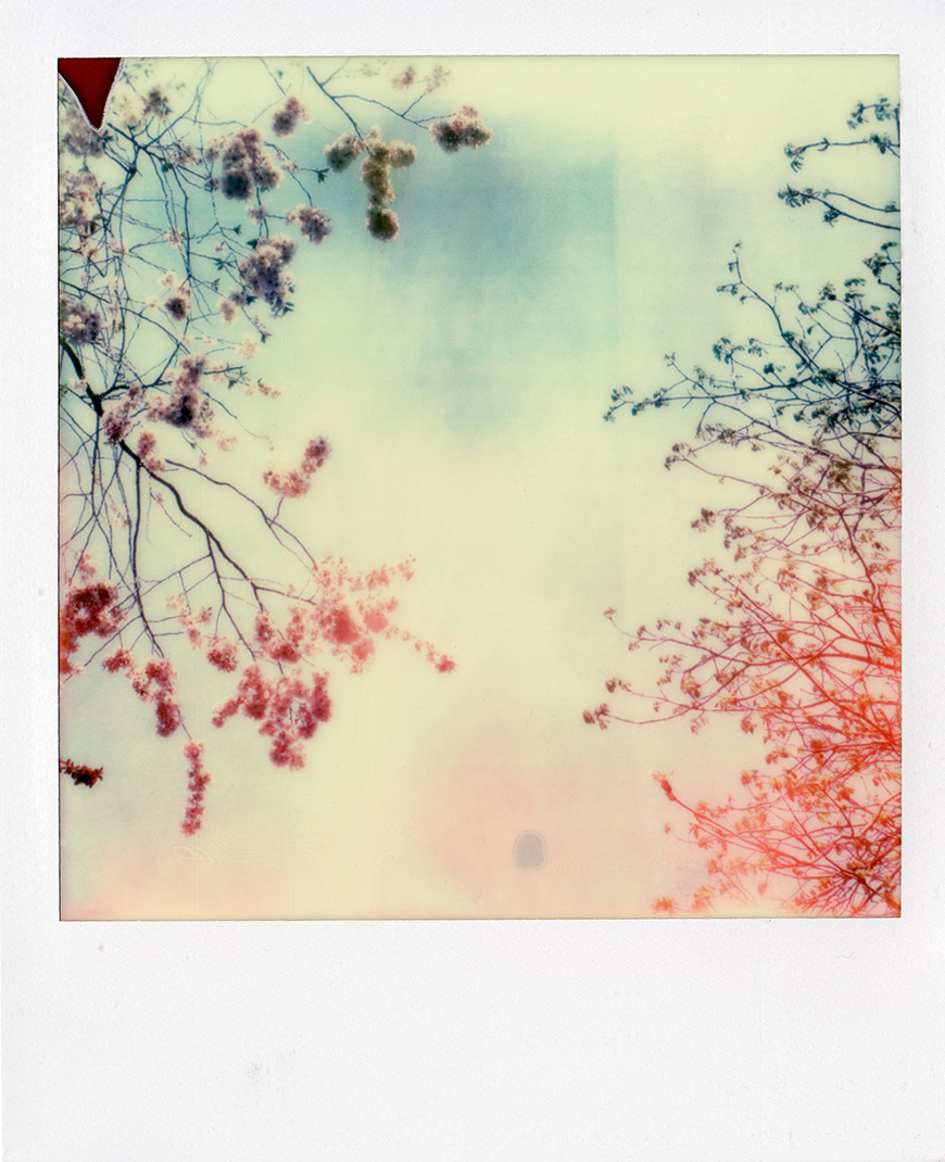 kelly_thompson_blog_polarois_blossoms.jpg