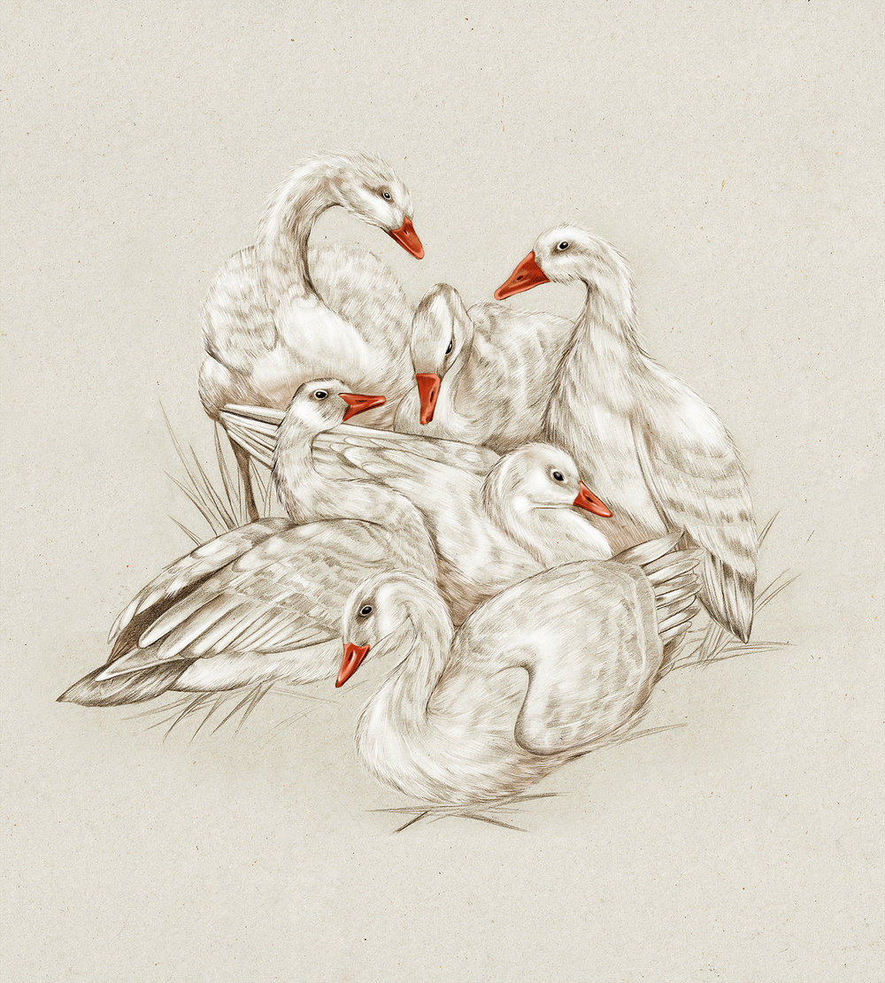 Kelly Thompson Whittakers Geese web.jpg