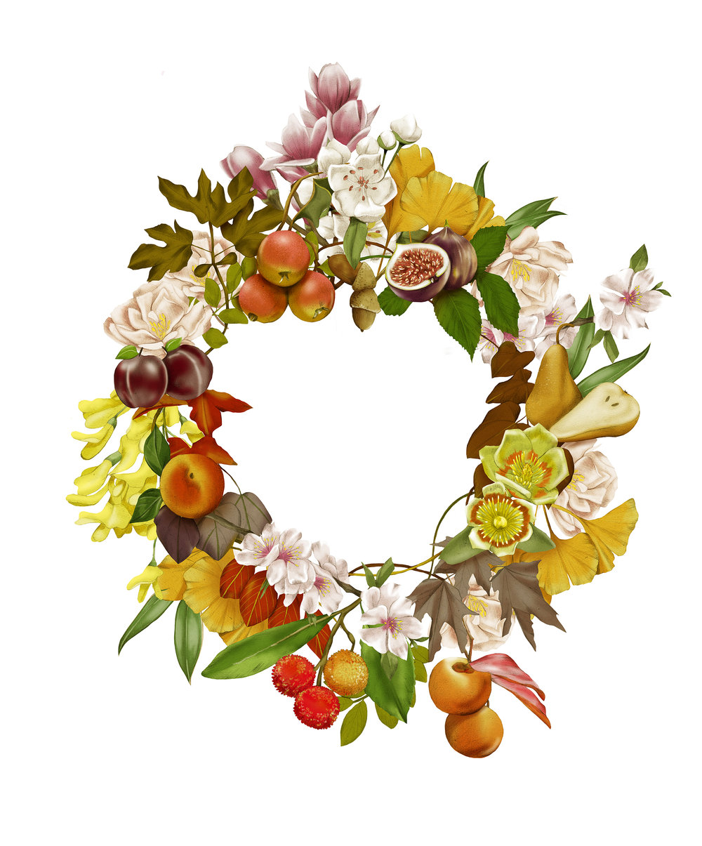 Kelly Thompson botanical illustration Flemings nursery wreath