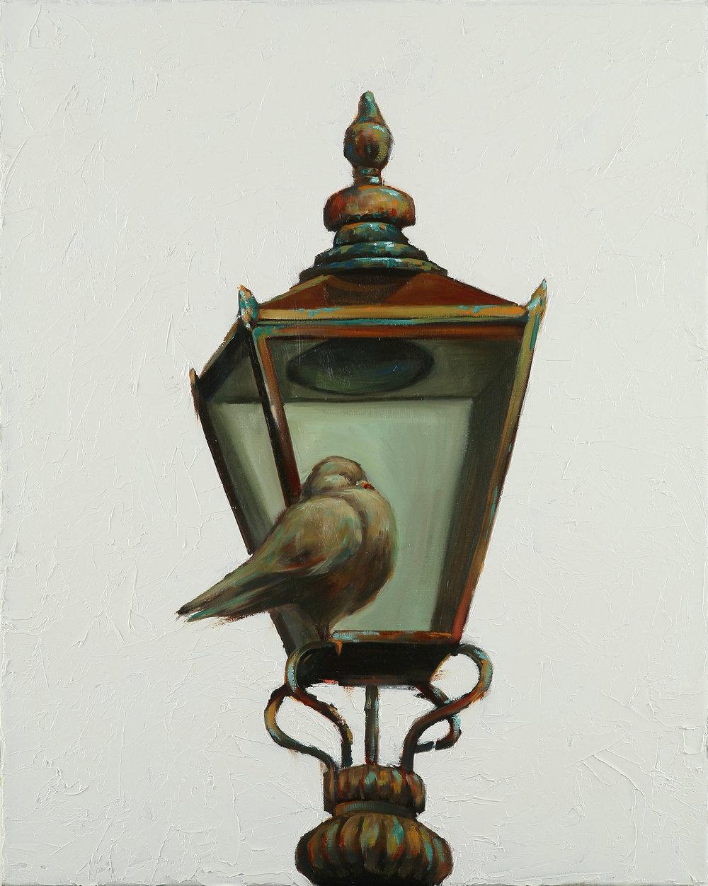 pigeon_15_millikan.jpg