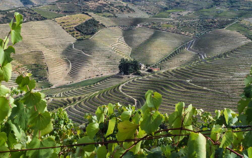 I Douro-dalen produseres gode viner og nydelig portvin. Landskapet er uendelig vakkert, så vakkert at det finnes på Unesco sin liste over spesielt naturskjønne områder.Romerne var de som skulle føre druestokkene til området, det som senere skulle føre til en stor produksjon av vin i Douro-dalen.