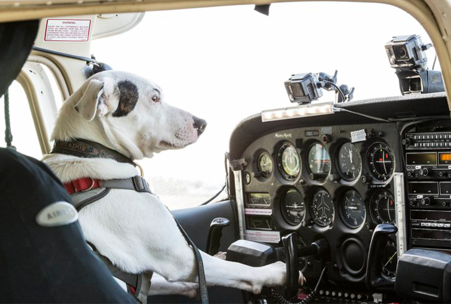 Dogs Might Fly – Sky One