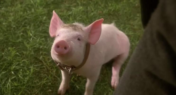 《小猪宝贝》剧照图