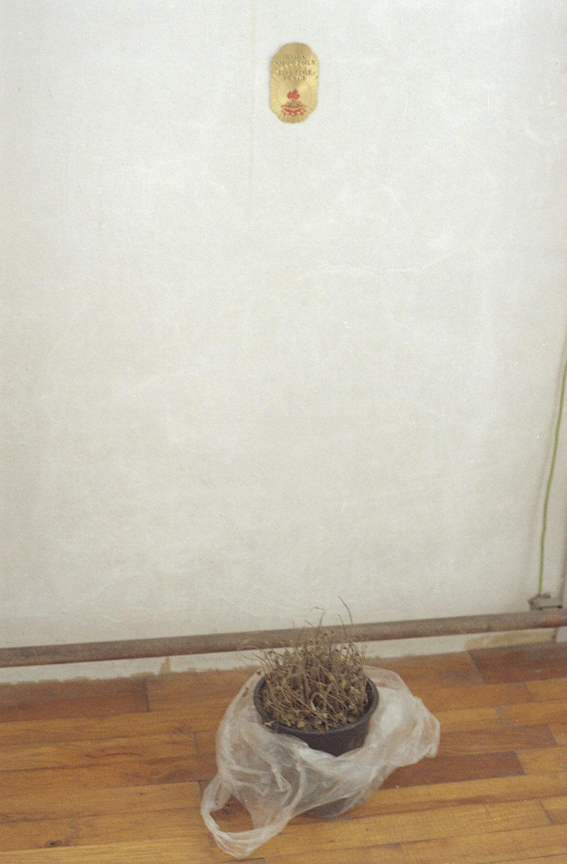 installationpflanze.jpg