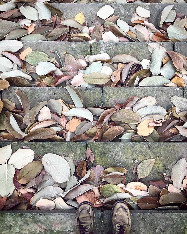 Beautiful muted colours of fallen magnolia leaves in the gardens at Dartington Hall in Devon yesterday.
