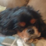 Dog gets shamanic healing