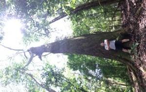 Matt tree