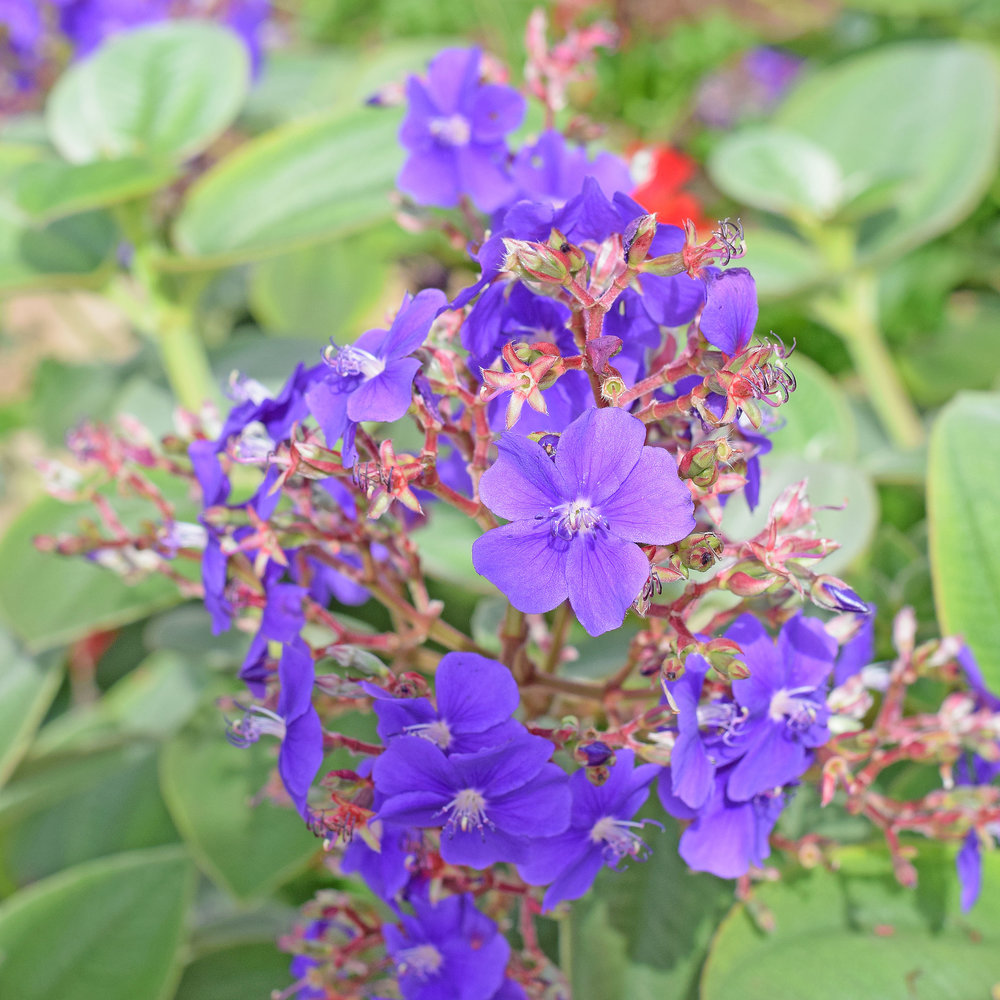 Africa Flower