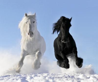 white and black horse.jpg