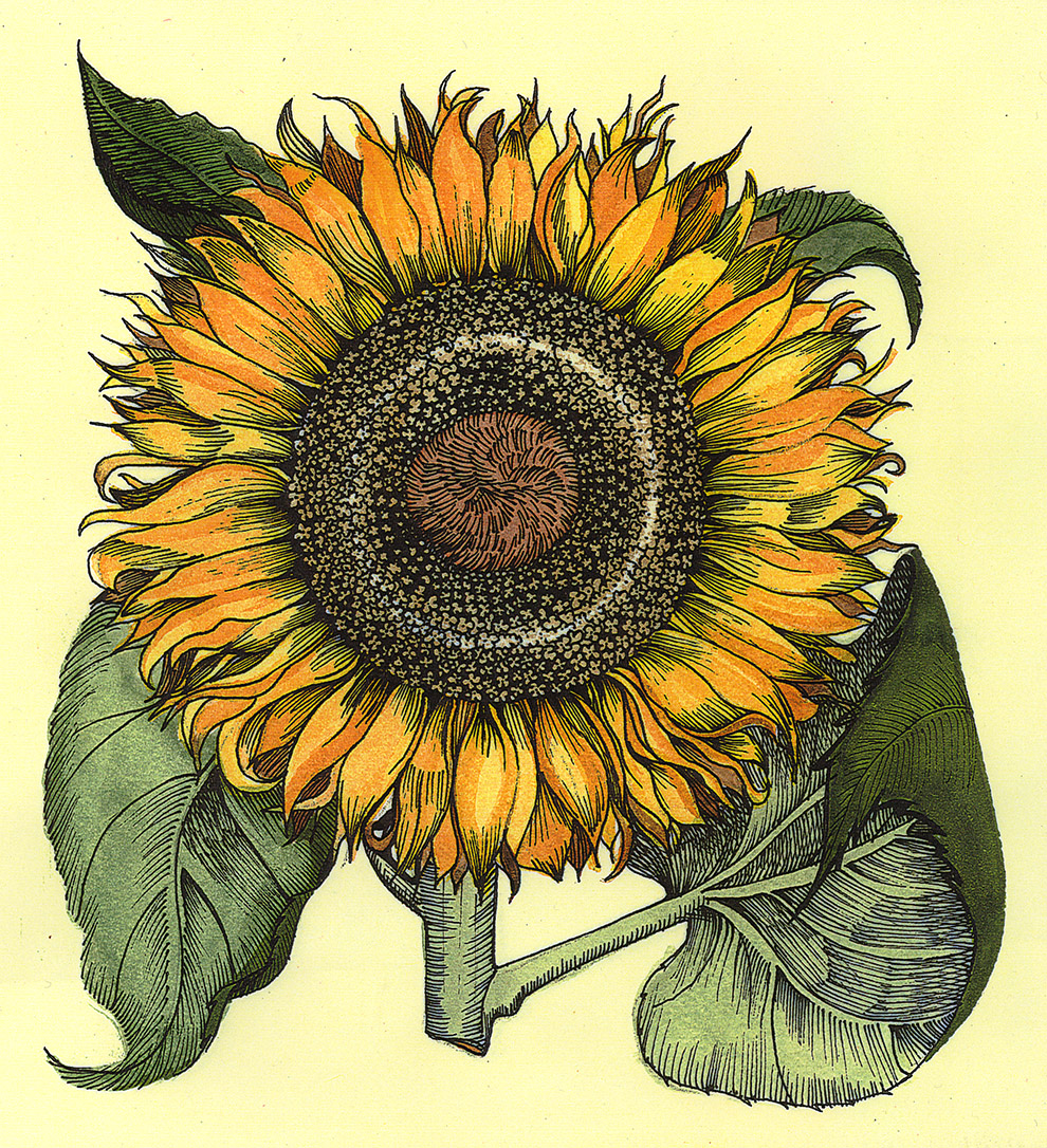 Patti King Slavtcheff_Floral_Sunflower