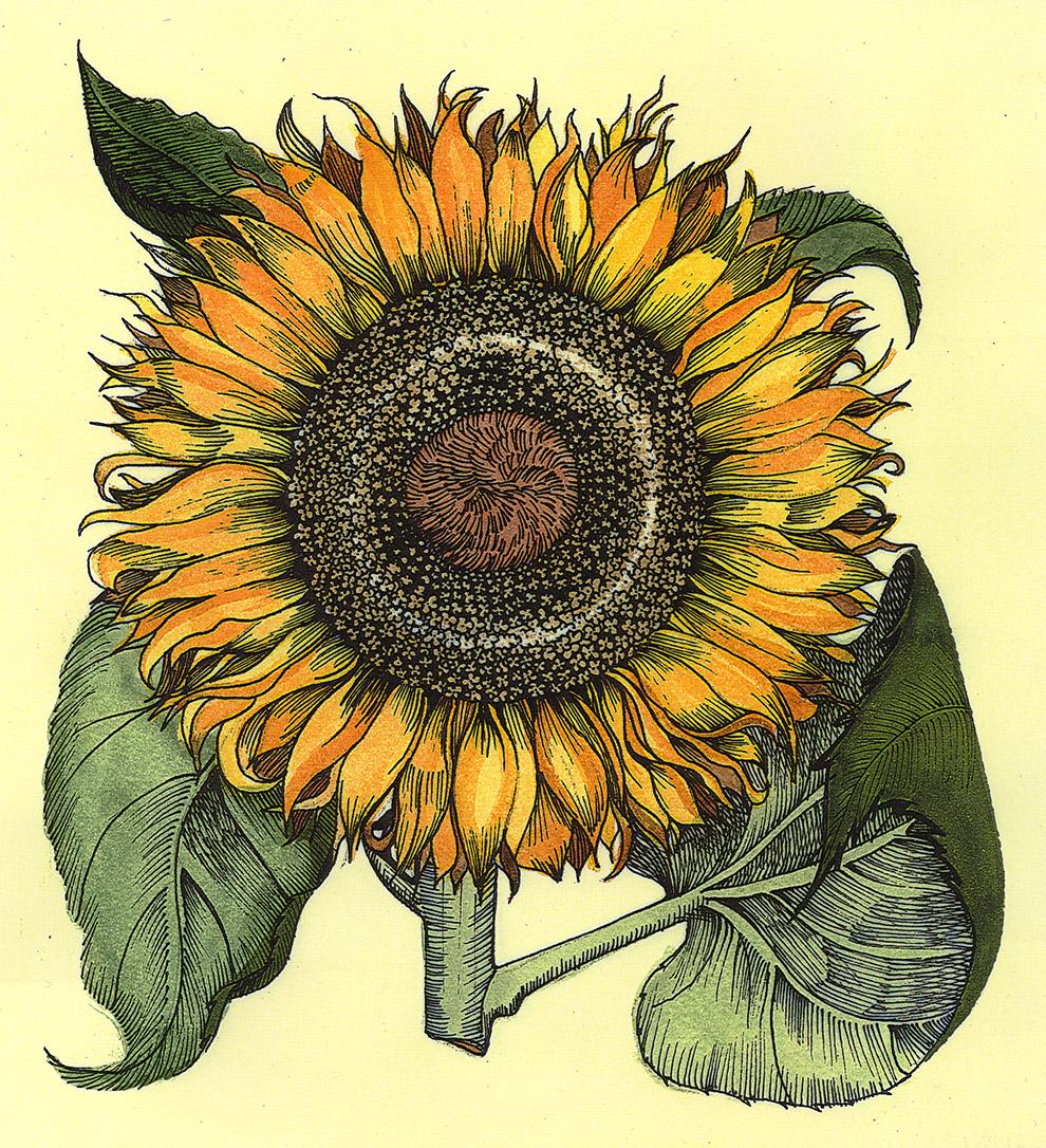 Patti King Slavtcheff_Floral_Sunflower