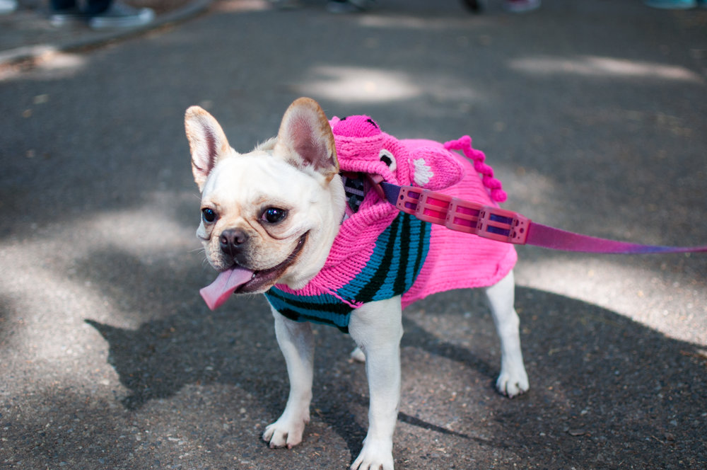 10.21.17_Tompkins Square Dog Parade-10.jpg
