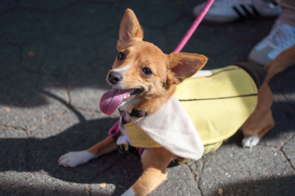 10.21.17_Tompkins Square Dog Parade-41.jpg