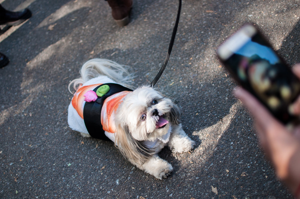 10.21.17_Tompkins Square Dog Parade-5.jpg