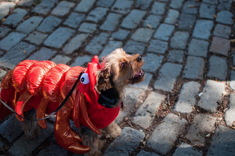 10.21.17_Tompkins Square Dog Parade-7.jpg