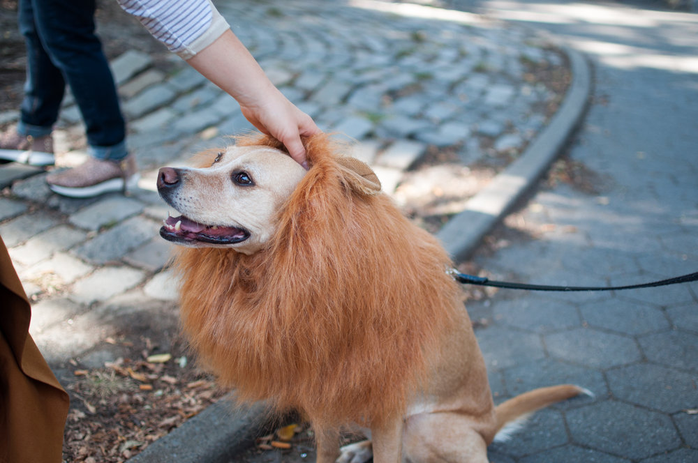 10.21.17_Tompkins Square Dog Parade-8.jpg