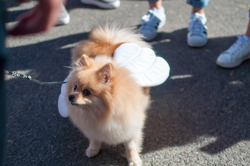 10.21.17_Tompkins Square Dog Parade-19.jpg