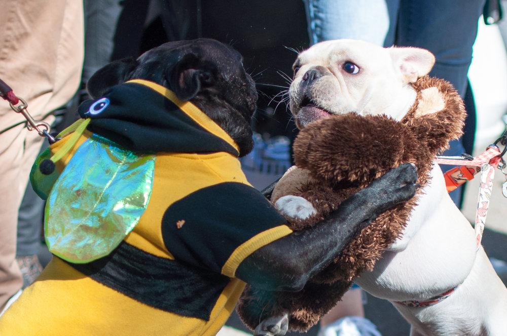 10.21.17_Tompkins Square Dog Parade-23.jpg