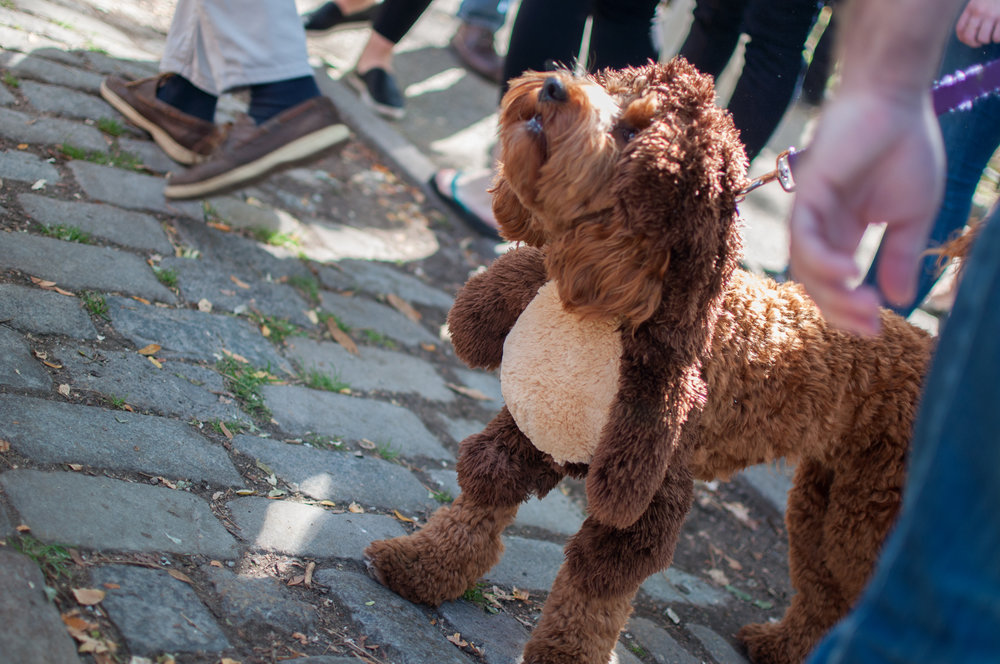 10.21.17_Tompkins Square Dog Parade-14.jpg